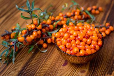 Ιπποφαές: Ένα φυτό για προστασία και τόνωση!